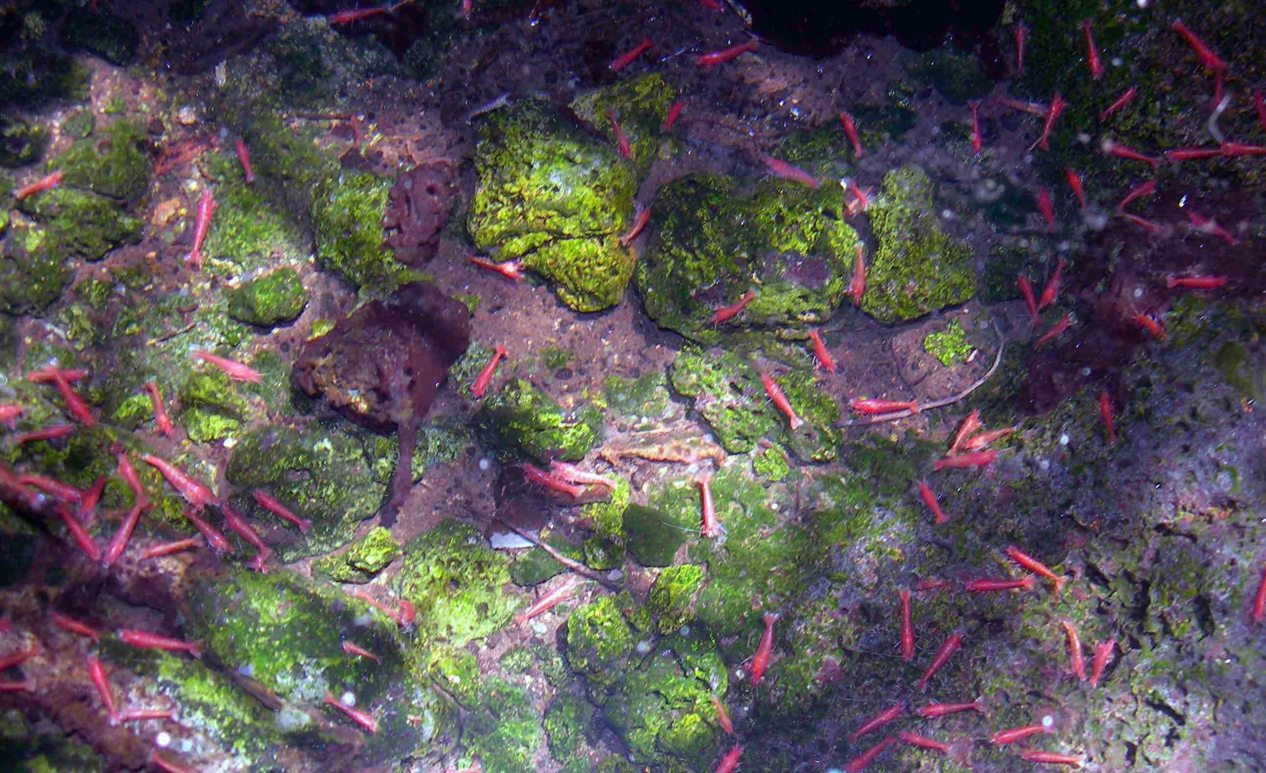 Ecology And Evolution In Anchialine Habitats Of The